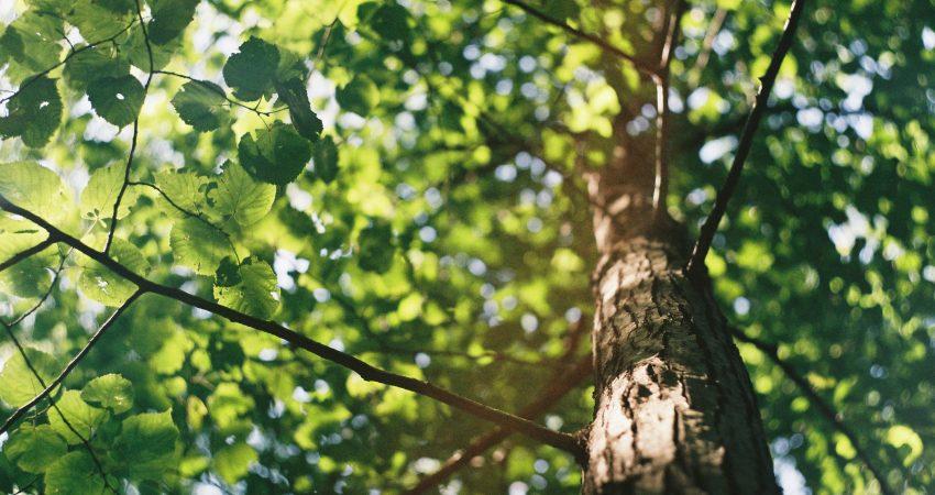 Scihr von unten in einen dicht beblätterten Baum