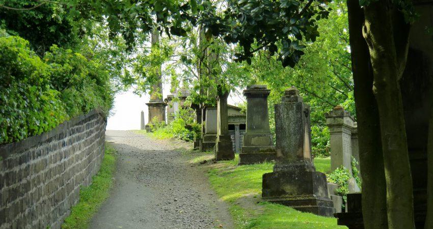 Blick auf einen baumbestandenen Weg über einen Friedhof